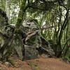 FOMFOK - Castle Rock State Park :