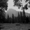 Yosemite Photographers Walk : A hour and a half as Ansel Adams