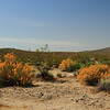 Mojave National Preserve  (7d) :